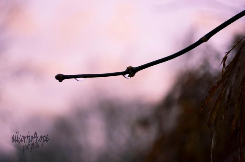 Sunrise behind the dew